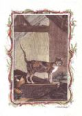 Greeting Card - Spanish Cat